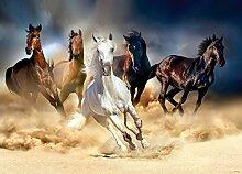 Fototapete Tapete Poster Pferde Tiere Mädchen