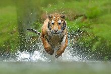 Fototapete Tiere 167212672