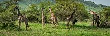Fototapete Tiere 211472375