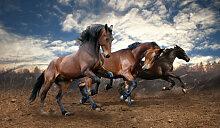 Fototapete Tiere 62921770