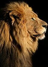 Fototapete Tiere 73598008