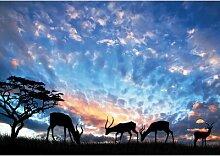 Fototapete Tiere Savanne 1.04 m x 152.5 cm