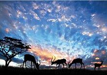 Fototapete Tiere Savanne 2.54 m x 368 cm