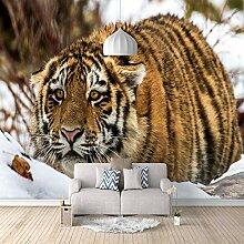 Fototapete Tiger 3D Wandbilder Für Fernseher