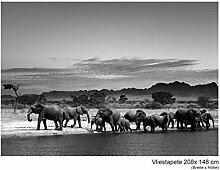 Fototapete Vlies Vliestapete Herd of Elephants Afrika Steppe Savanne Elefant Safari Wild Tier Wand Bild Dekoration Modern XXL Bahn No.53_II (208x148cm)