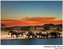 Fototapete Vlies Vliestapete Herd of Elephants Afrika Steppe Savanne Elefant Safari Wild Tier Wand Bild Dekoration Modern XXL Bahn No.53 (208x148cm)