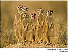Fototapete Vlies Vliestapete Meerkat Family Tiere
