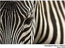 Fototapete Vlies Vliestapete Zebra Augenblick Tier Wild Safari Zoo Afrika Steppe Savanne Wand Bild Dekoration Modern XXL Bahn No.9 (152,5x104cm)