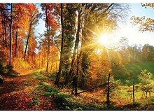 Fototapete Wald 0.70 m x 104 cm