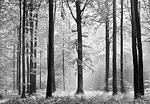 Fototapete - WALD - (115i) Größe 366x254 cm 8-teilig schwarz-weiß - Wald Sonne Bäume Landschaft Natur Wohnzimmer Kinderzimmer Küche- Motivtapete Postertapete Bildtapete Wall Mural
