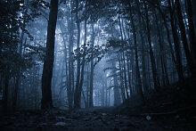 Fototapete Wald 121398181