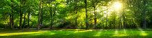 Fototapete Wald 142080280