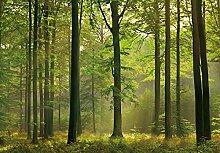 Fototapete - WALD - (216i) Größe 366x254 cm 8-teilig - Sonne Bäume Herbst Landschaft Natur Wohnzimmer Kinderzimmer Küche- Motivtapete Postertapete Bildtapete Wall Mural