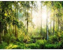 Fototapete Wald 396 x 280 cm Vlies Wand Tapete