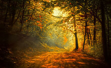 Fototapete Wald 60738927