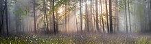 Fototapete Wald 75207995