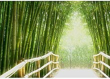 Fototapete Wald - ALLE WALDMOTIVE auf einen Blick