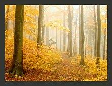 Fototapete Wald - Herbst 154 cm x 200 cm