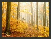 Fototapete Wald - Herbst 193 cm x 250 cm