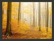 Fototapete Wald - Herbst 231 cm x 300 cm
