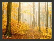 Fototapete Wald - Herbst 270 cm x 350 cm