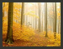 Fototapete Wald - Herbst 309 cm x 400 cm