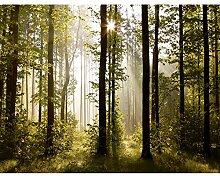 Fototapete Wald Landschaft 396 x 280 cm Vlies Wand