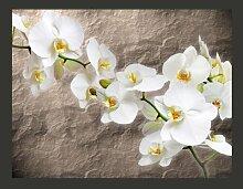 Fototapete Weiße Orchidee 154 cm x 200 cm East