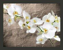 Fototapete Weiße Orchidee 193 cm x 250 cm East