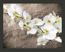 Fototapete Weiße Orchidee 231 cm x 300 cm East