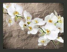 Fototapete Weiße Orchidee 270 cm x 350 cm East