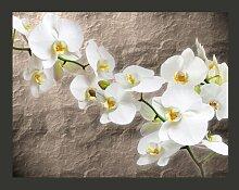 Fototapete Weiße Orchidee 309 cm x 400 cm East