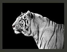 Fototapete Weißer Tiger 270 cm x 350 cm East