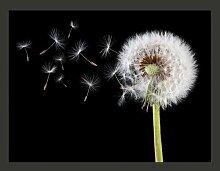 Fototapete Wind und Pusteblume 154 cm x 200 cm