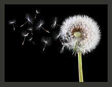 Fototapete Wind und Pusteblume 231 cm x 300 cm