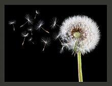 Fototapete Wind und Pusteblume 309 cm x 400 cm