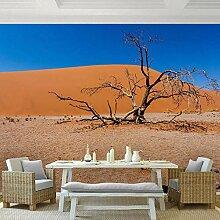 Fototapete Wüste Vlies Tapete Moderne Wanddeko