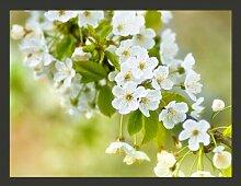 Fototapete Zweig mit weißen Kirschblüten 231 cm