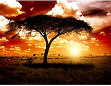 Fototapeten Afrika Sonnenuntergang 352 x 250 cm