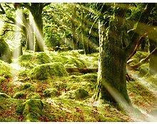Fototapeten Wald 352 x 250 cm Vlies Wand Tapete