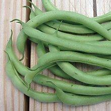 Frankreich Bohnen Containder - Desi Gemüsesamen,