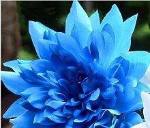 freies Schiff Förderung! 40 Samen Blue Dahlia