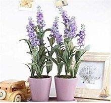 Freies Verschiffen 100 PC Lavendel Bonsai Kraut