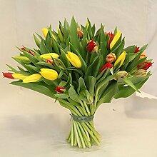 frische Tulpen, der Blumenstrauß mit bunten