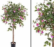 Fuchsie, 666 Blätter, 126 Blüten violett, Höhe