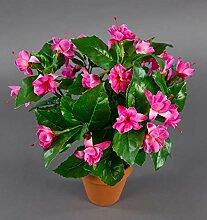 Fuchsien/Fuchsia 40cm rosa-pink im Topf ZF