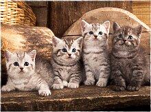Fußmatte Kitty, braun (60/80 cm)