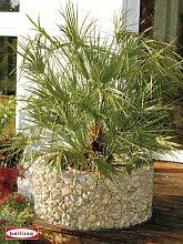 Gabionen Hochbeet für Garten Balkon 72/92 cm Zink-Aluminium-Beschichtung