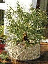 Gabionen Hochbeet für Garten Balkon 72/92 cm