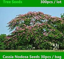 Garden Greening Cassia Nodosa Gartenbaum, 300